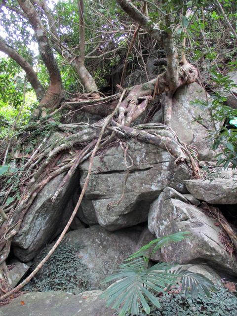 Янода, огромные валуны, мох и деревья с извилистыми корнями
