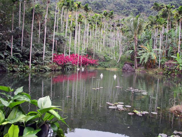 Янода, живописное озеро с лебедями