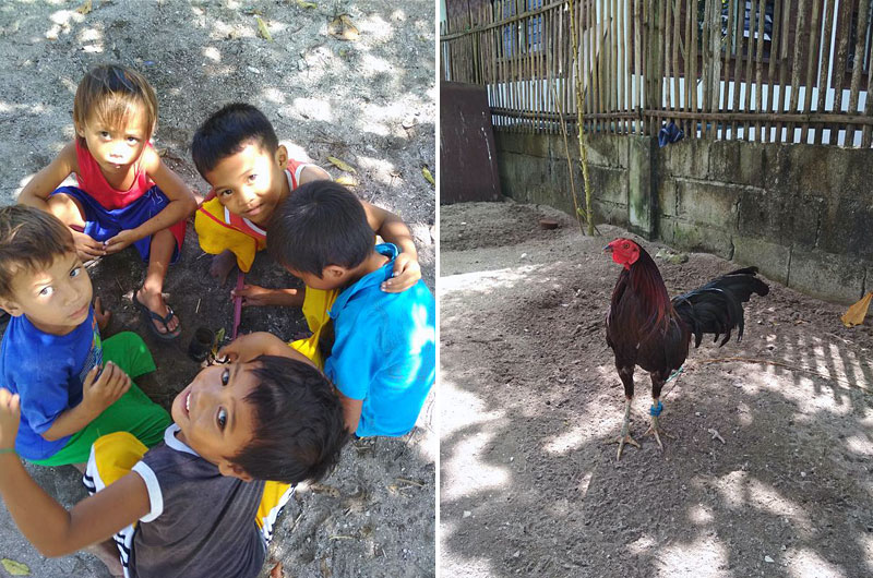 Дети и боевые петухи острова Малапаскуа