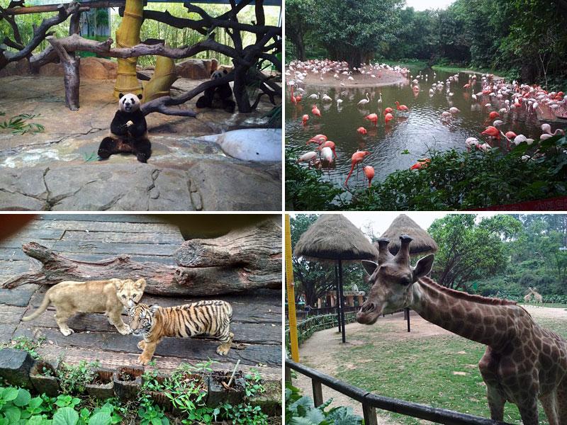 В сафари парке Chimelong в Гуанчжоу