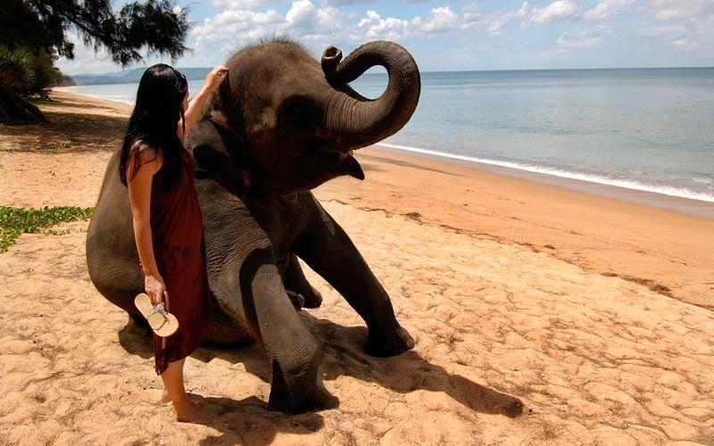Слоник уже на Шри-Ланке, а Вы?